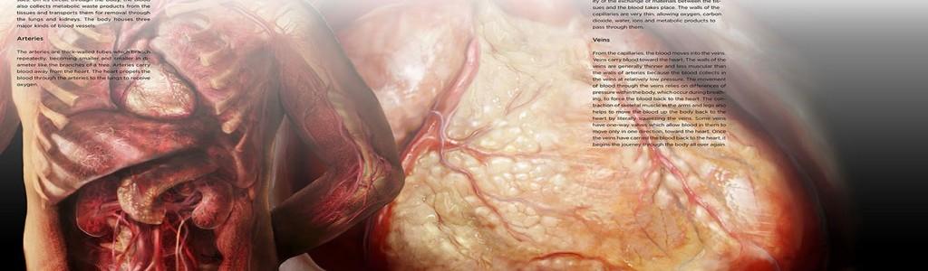 Sandor Cardiovascular